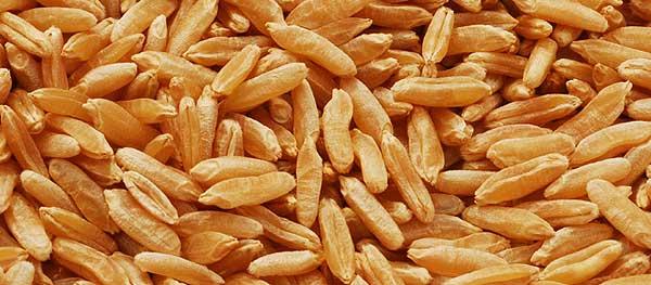 Propiedades del Kamut o trigo Khorasan