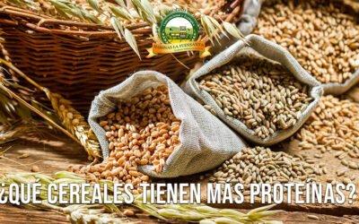 ¿Qué cereales tienen más PROTEÍNAS?