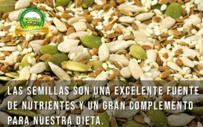 Las semillas son una excelente fuente de nutrientes y un gran complemento para nuestra dieta.